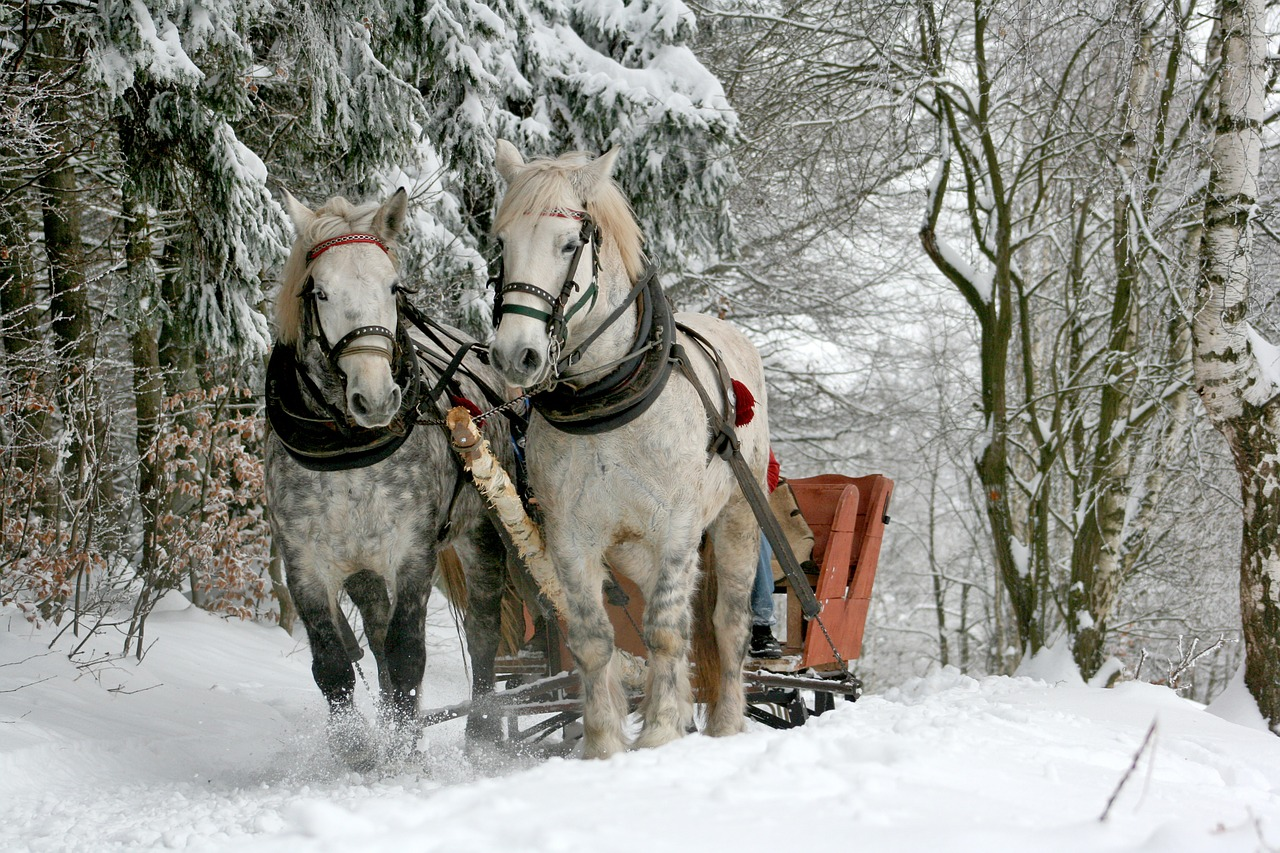 Sleigh Rides in Winter Park