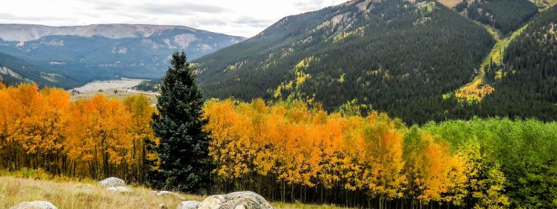 fall foliage near winter park colorado