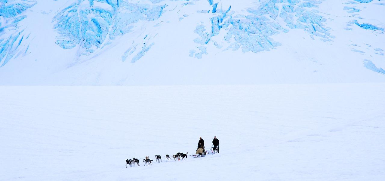 Winter Park Dog Sledding