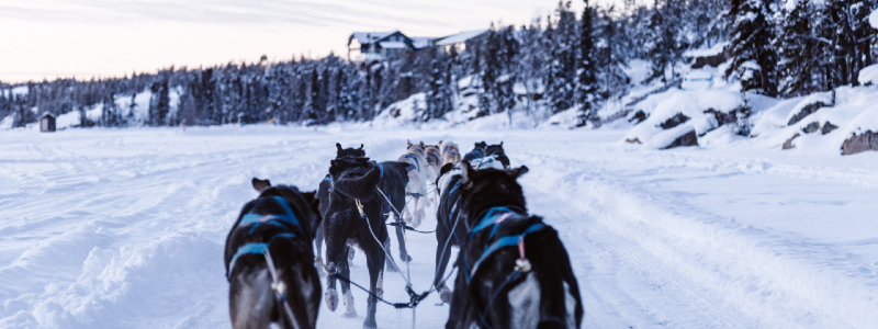 dog sledding fraser colorado