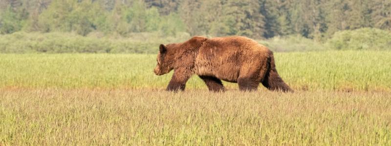 bears in colorado